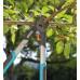 Сучкорез Гардена с храповым механизмом Gardena 480 B Classic 08776